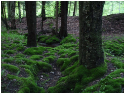 How-to-get-rid-of-Moss