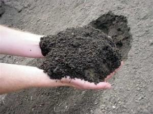 Loamy-soils