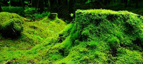 What-is-Moss